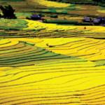 Du lịch Việt Nam đứng ở vị trí nào ?